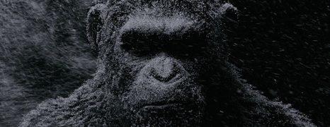 La Guerra del Planeta de los Simios – Tráiler