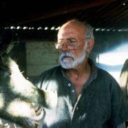Razorback: Los Colmillos del Infierno (1984)