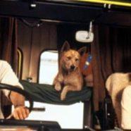 Carretera Mortal (1981)